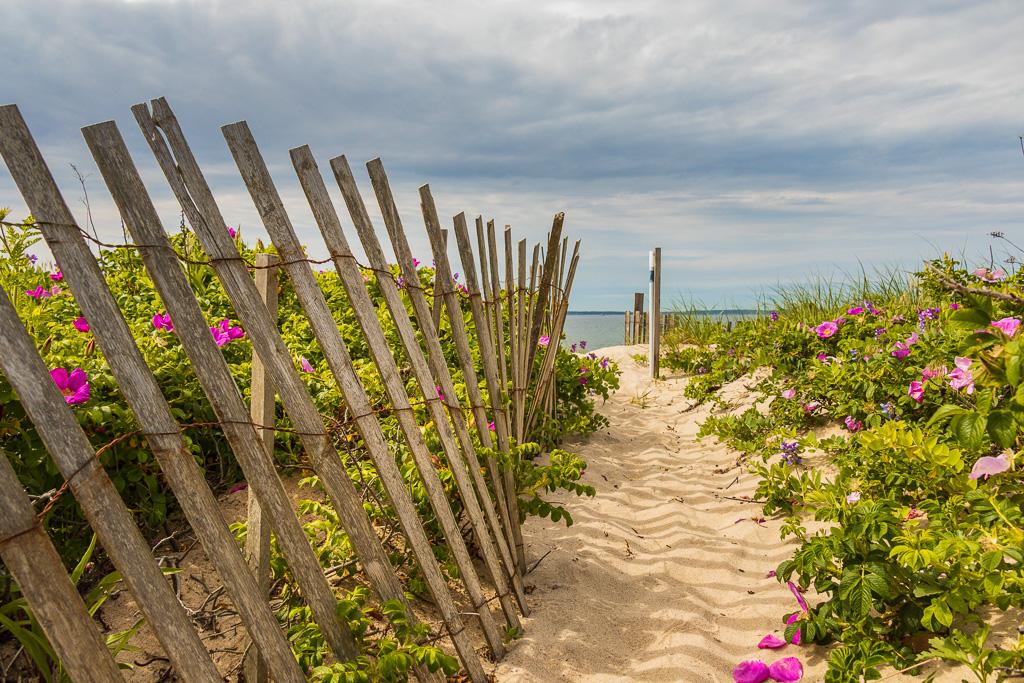Beach-Fence-and-Beach-Roses---Falmouth.jpg