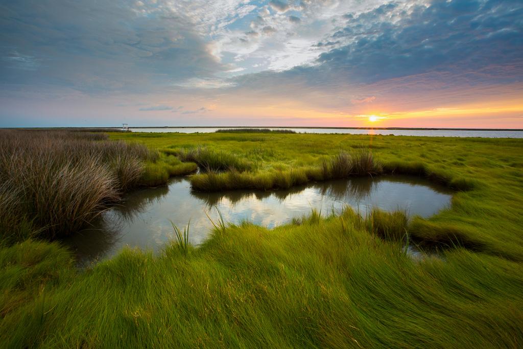 20210206-smith-island-marsh.jpg