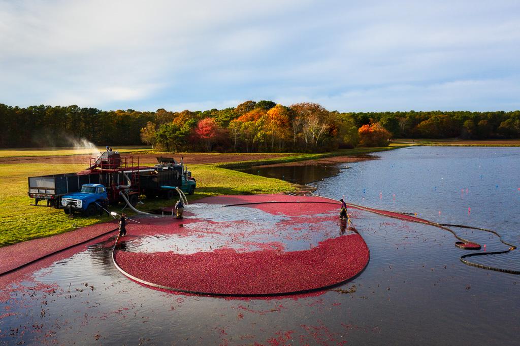 Cranberry-Bog-Harvest__.jpg