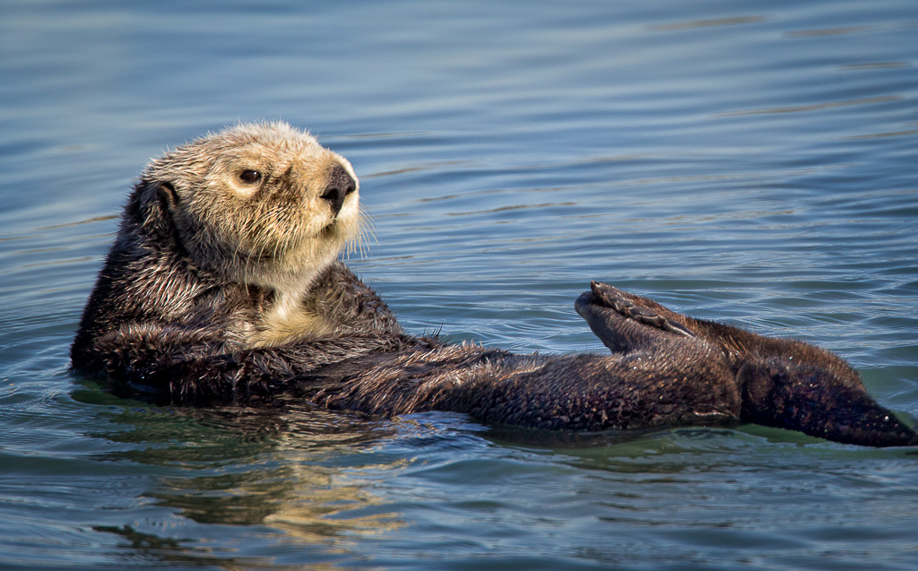 20210206-sea-otter-2.jpg